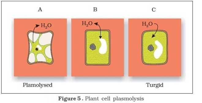 plant cell contents