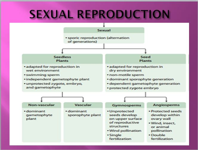 Describe the sexual reproduction in plants