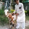 abdulhadi665