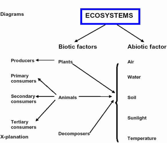 Diagram Between Relation Of Biotic And Abiotic Component Of The
