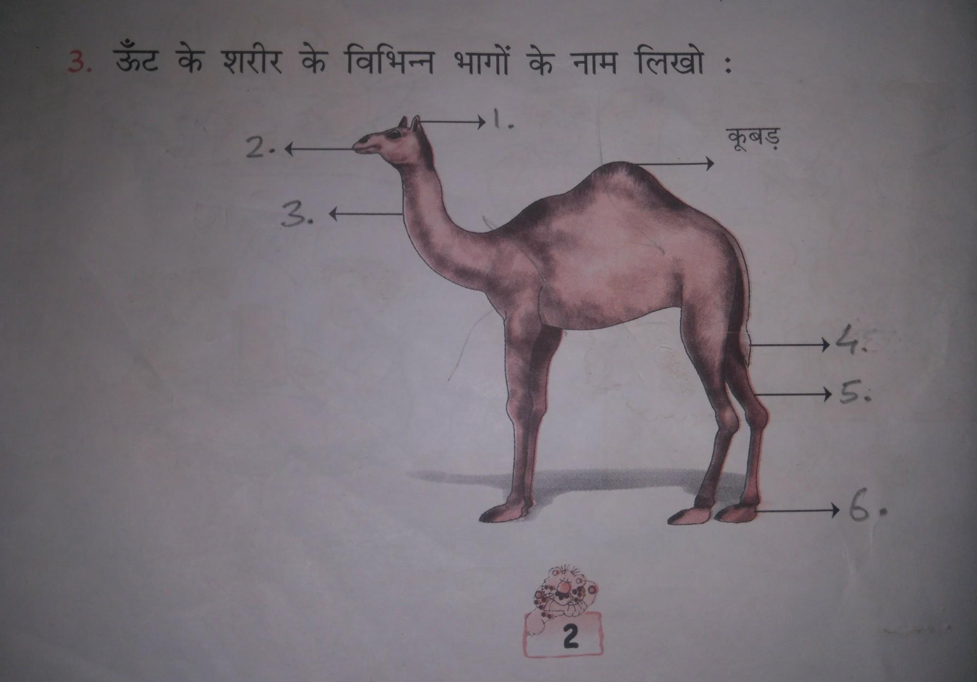 Name the Camel's body parts name in hindiHelp me fast - Brainly in