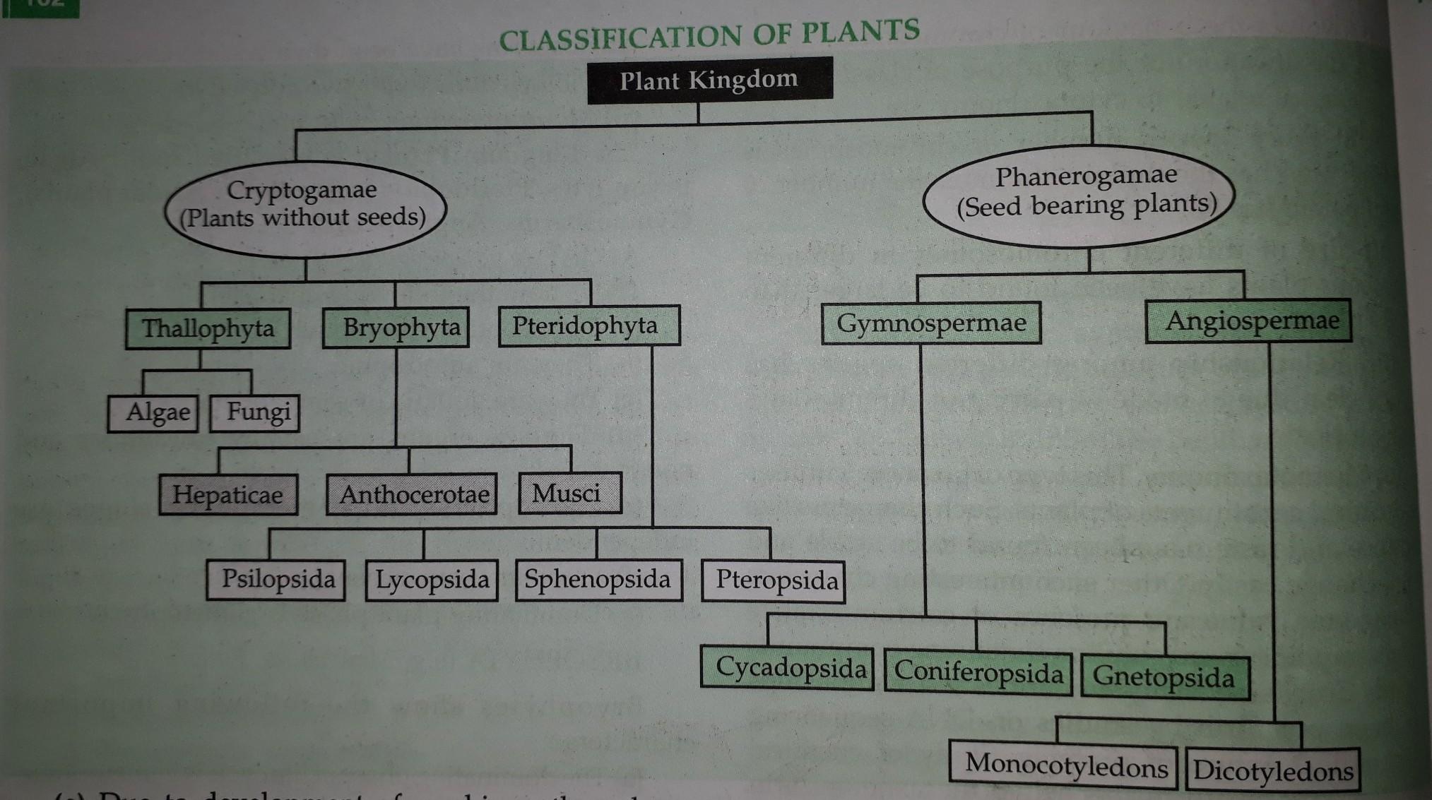 Explain the classification of kingdom plantae with the ...