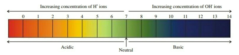 applications of ph in daily life