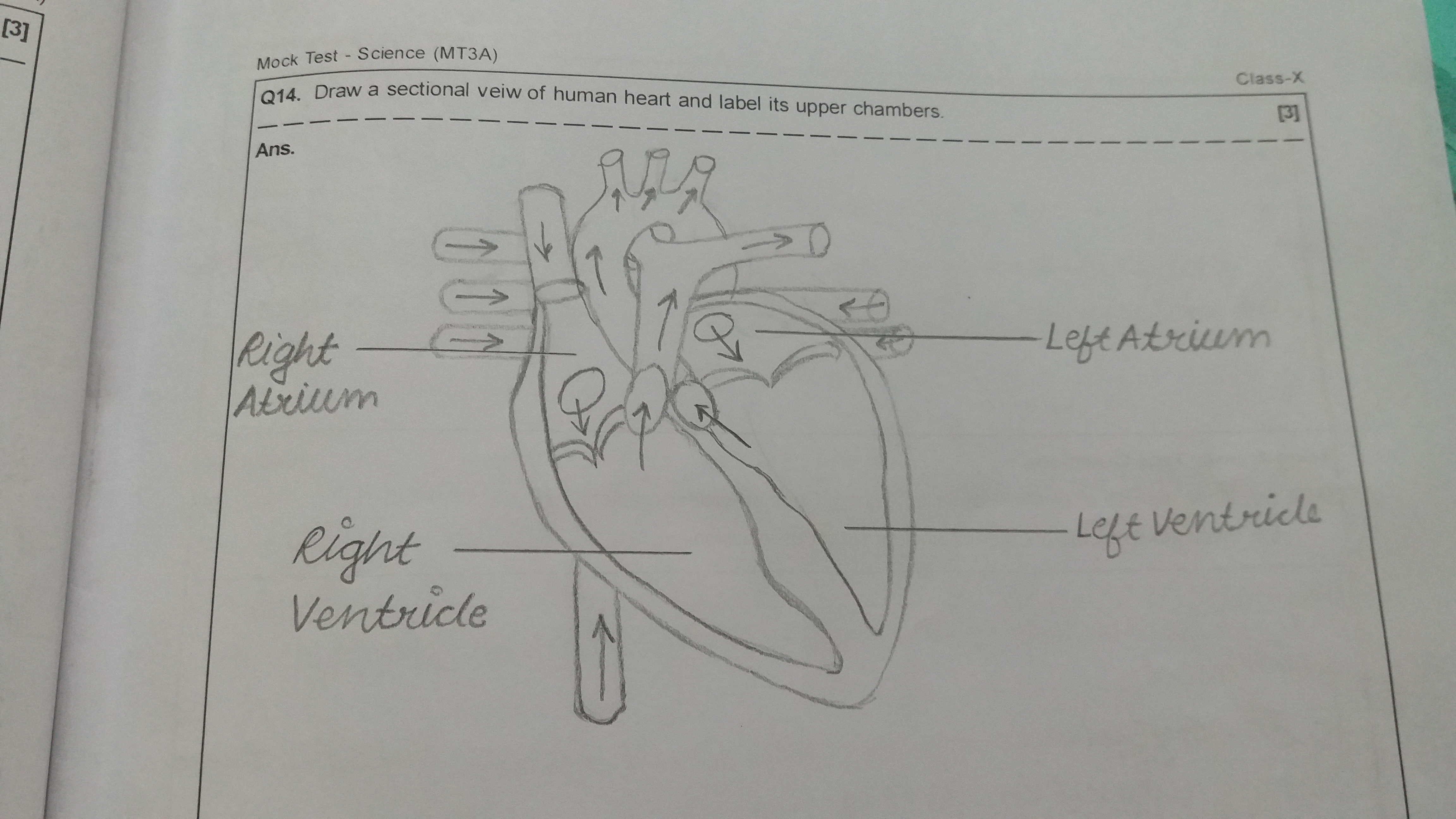 Easy Science Draw A Freebody Diagram For Goldfish Physics How Can We The Of Heart Easily 4608x2592