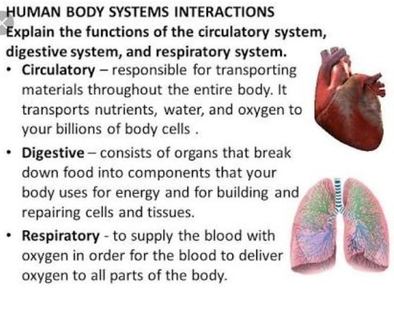 Explain the function correlation of circulatory system with