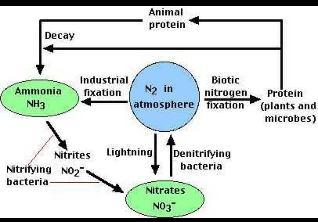 Explain schematic ray diagram of nitrogen cycle brainly download jpg pooptronica Choice Image