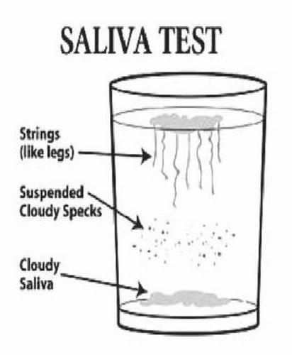 diagram on action of saliva on flour