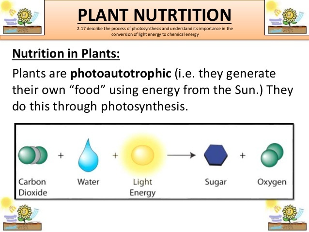 Describe Nutrition In Plants Through A Flow Chart Brainly In