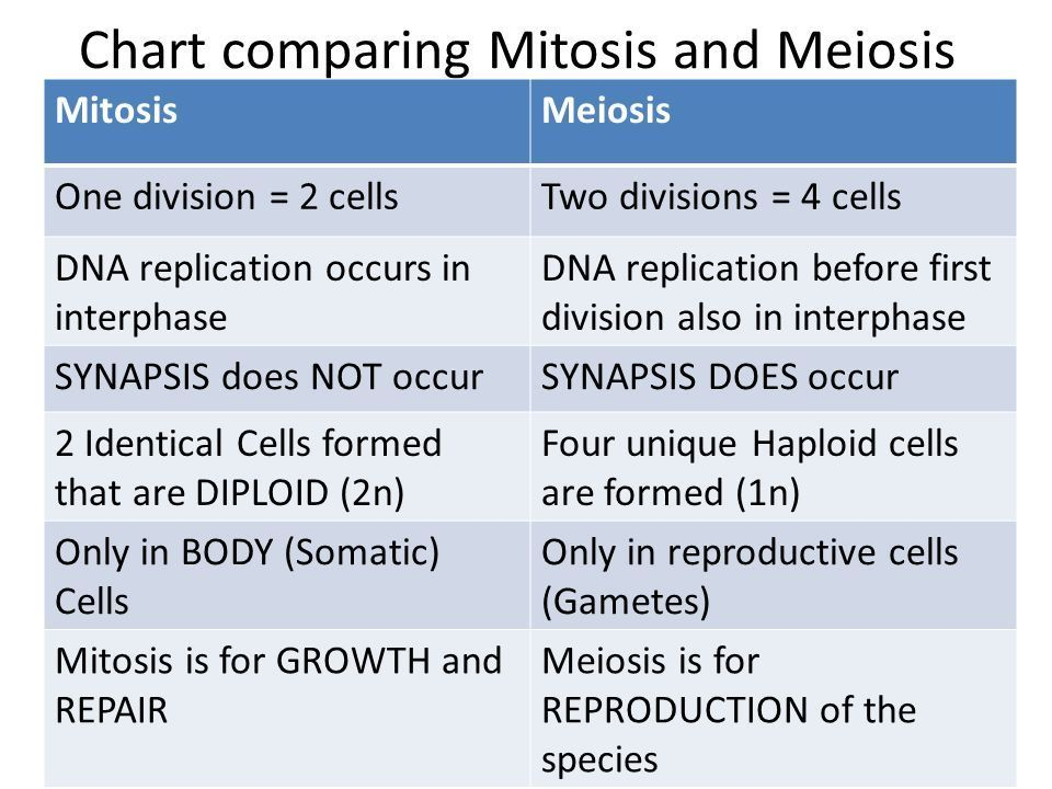 the similarities and differences between mitosis and meiosis