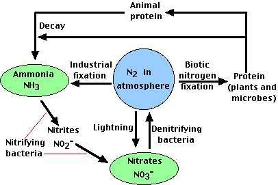 an introduction to the analysis of nitrogen fixation Electrochemical nitrogen-to-ammonia fixation is emerging as a sustainable strategy to introduction fixation of naturally cyclic voltammetry analysis.