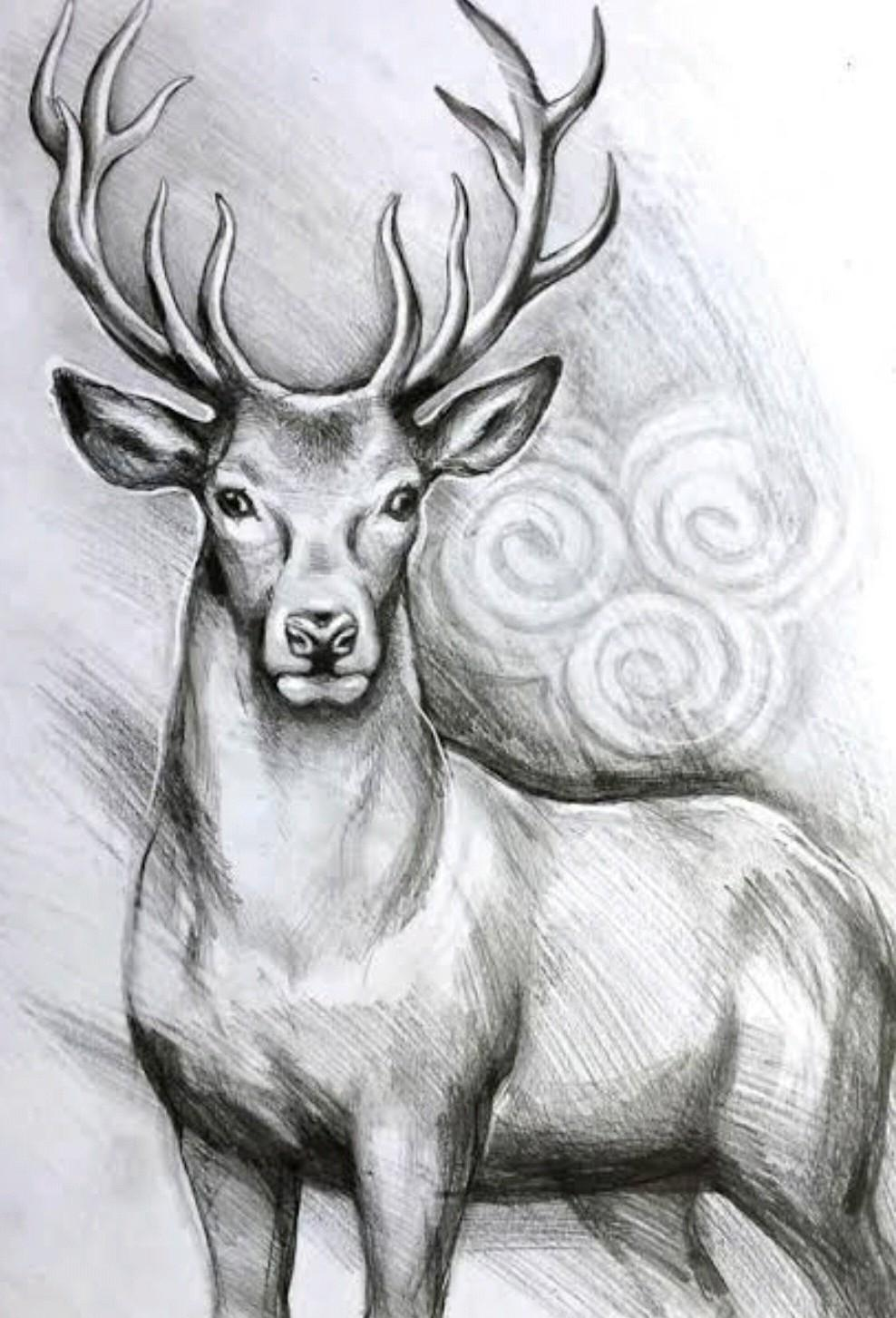 Wild Life Drawing And Pencil Shading Deer Lion And Squirrel Brainly In