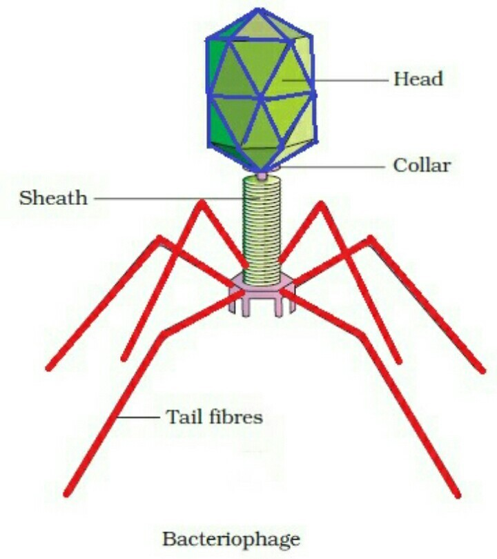 Why Is A Shape Of A Virus Just Like A Robot Please Send Me A Photo