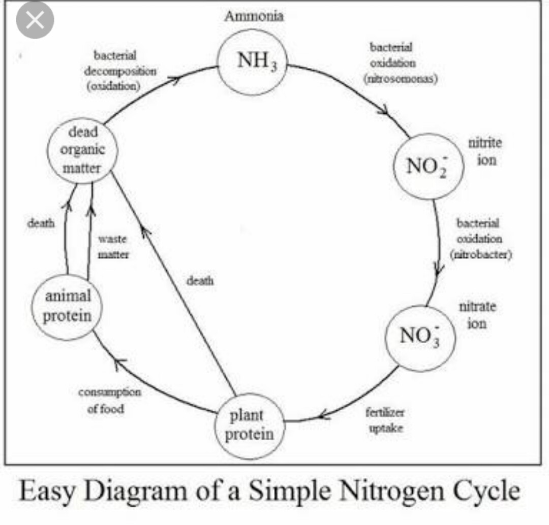 Simple Nitrogen Cycle Diagram | World of Reference