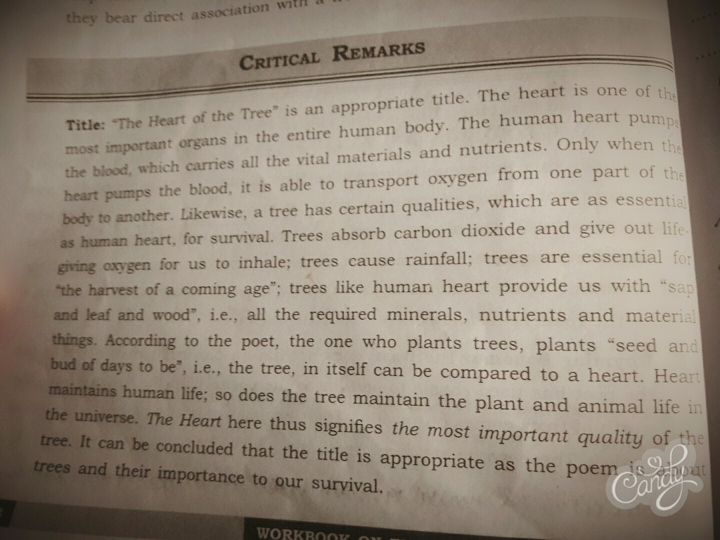 essay for environment life is beautiful