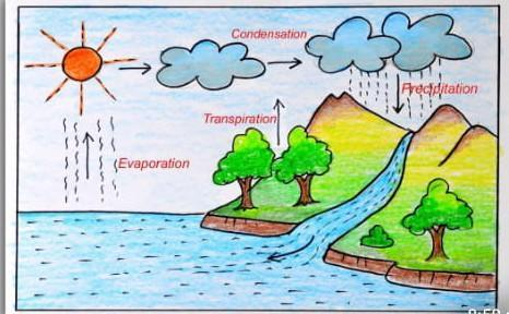 Draw a suitable diagram to explain the water cycle. Describe each step. -  Brainly.inBrainly.in