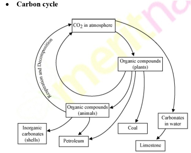 Diagram of carbon cycle brainly download png ccuart Images
