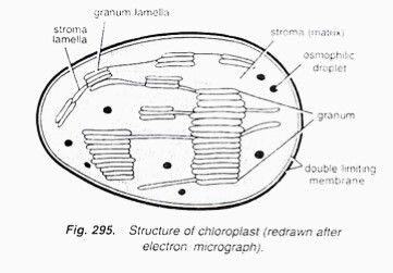 Chloroplast are energy conveters explain the the statement draw download jpg ccuart Gallery