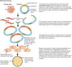Explain the process of gene cloning with well labelled diagrams download jpg ccuart Gallery