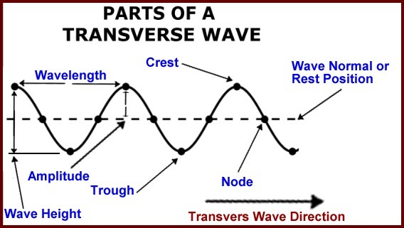 Draw A Diagram Of Transverse Wave And Labelled It Brainly
