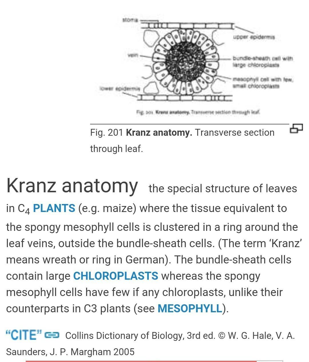 what do u mean by kranz anatomy? - Brainly.in