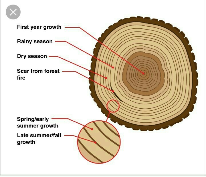 1 Biologya Transverse Section Of The Trunk Of A Tree Shows