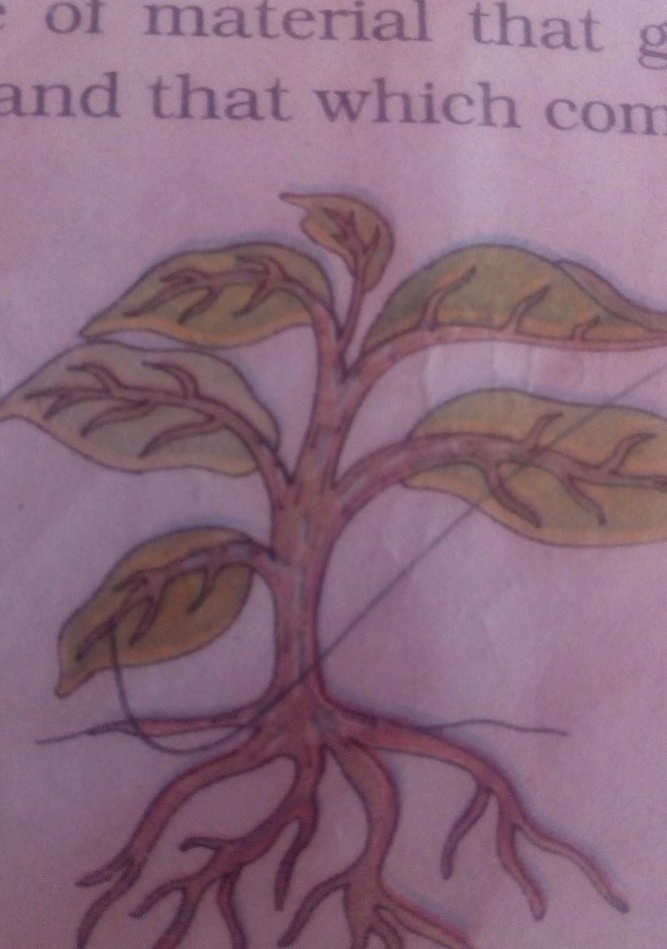 The given figure shows the plant steam as two way path . Explain ...