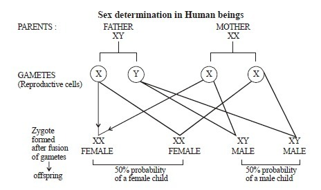 human sex determination images in Oklahoma City