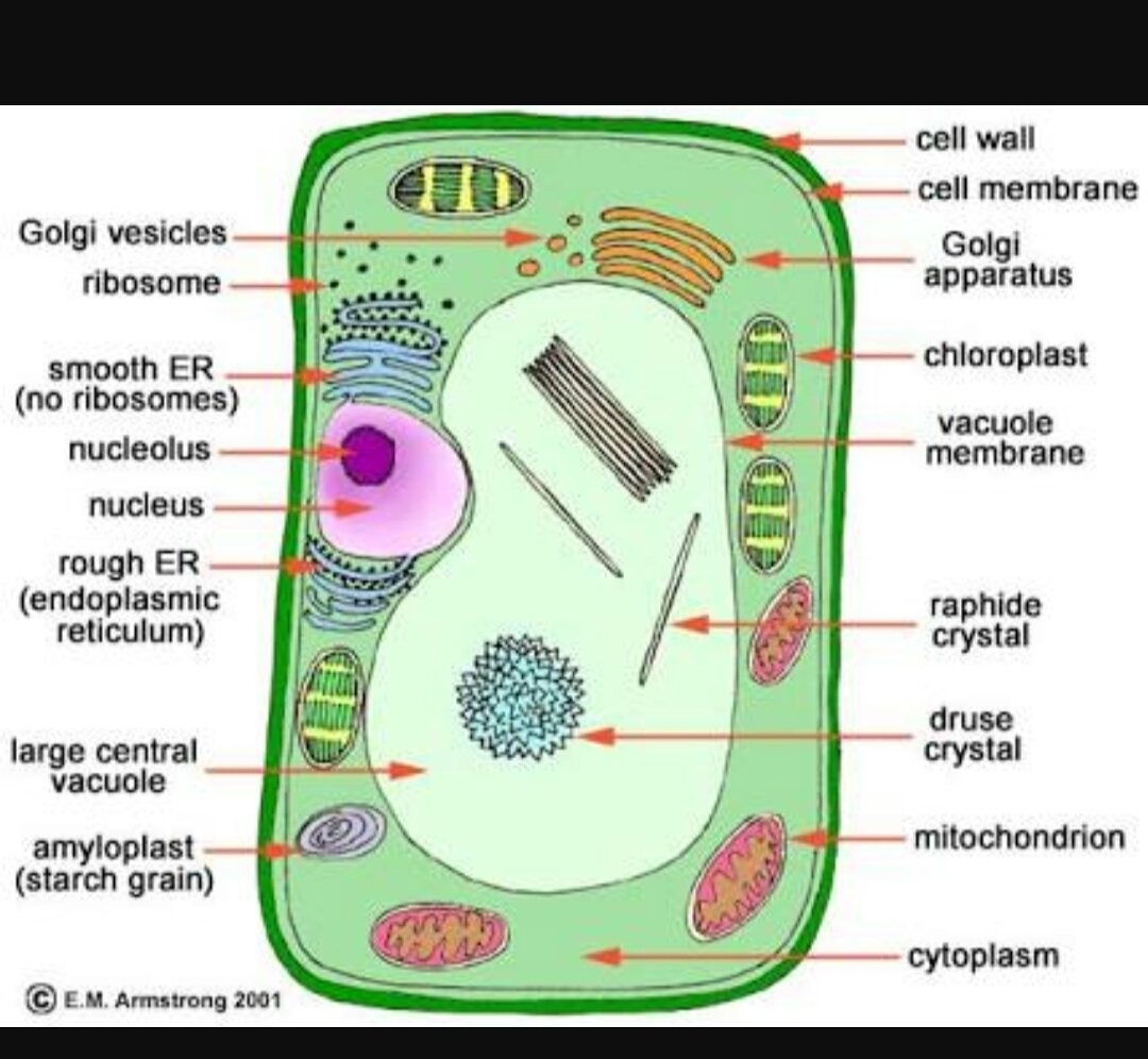Draw a plant cell and label the parts which a.determines the ...