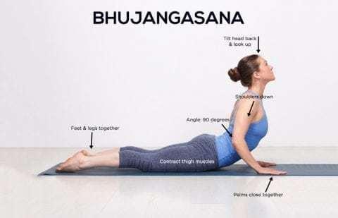 write the procedure and contraindication of bhujangasana