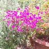 ayushigupta2001