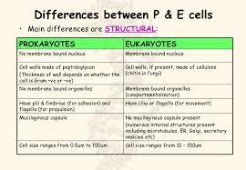 compare and contrast between prokaryotic and eukaryotic cells