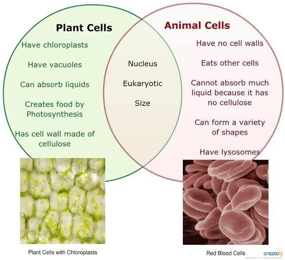 Plant And Animal Venn Diagram Answers Explore Schematic Wiring