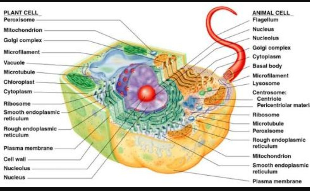 Labelled Plant Cell Microscope Image - Micropedia