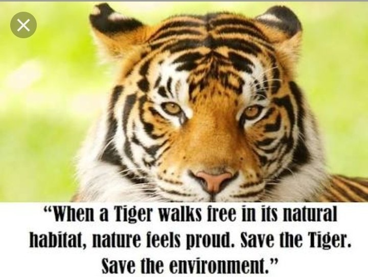 slogan of save tiger - Brainly in