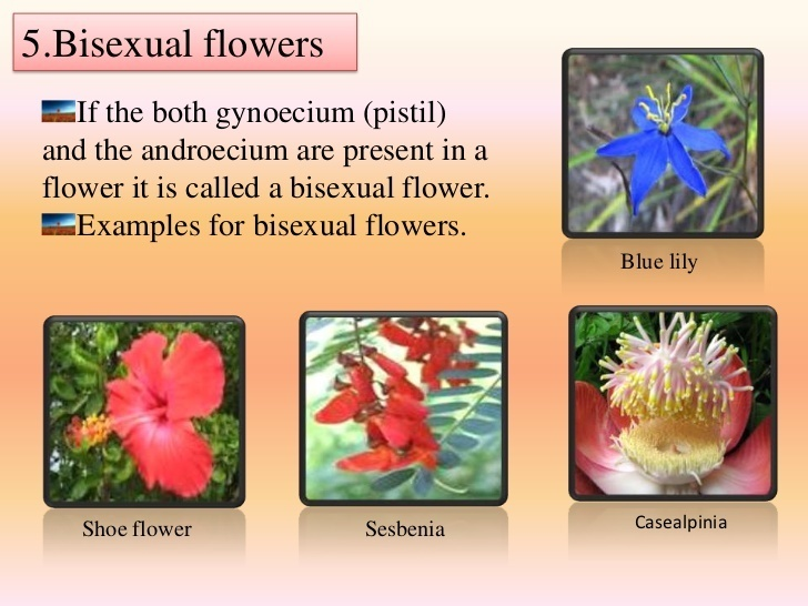 Define bisexual and unisexual flower