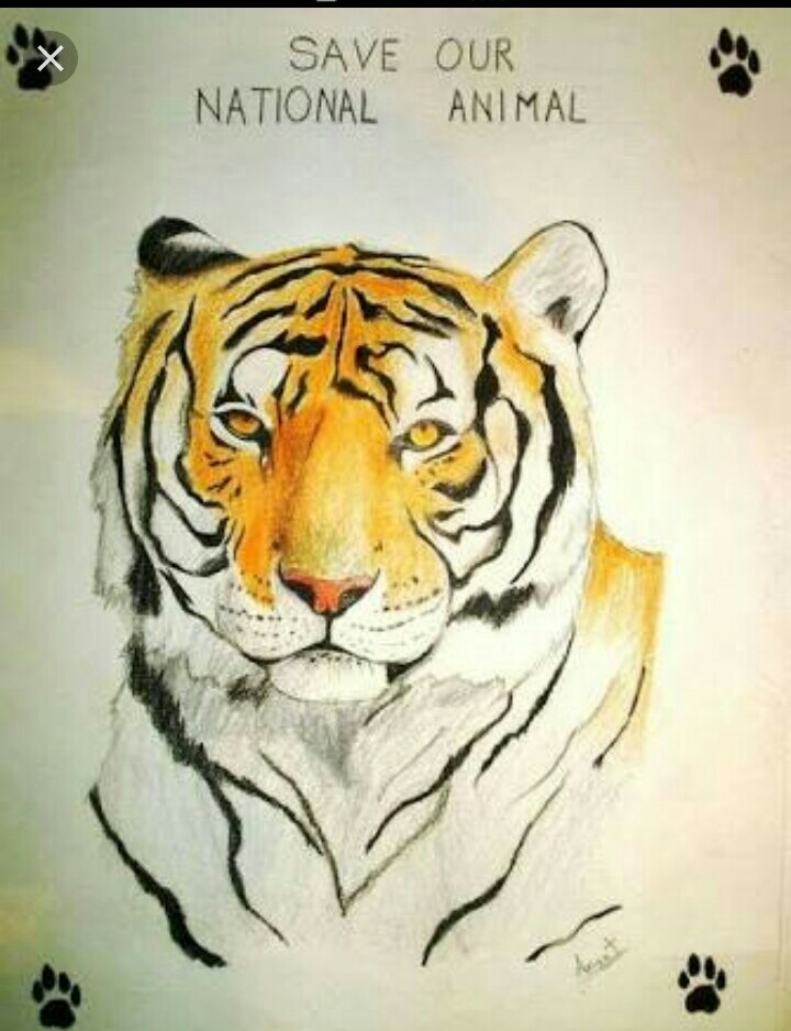 Save The Tigers Poster Brainly In