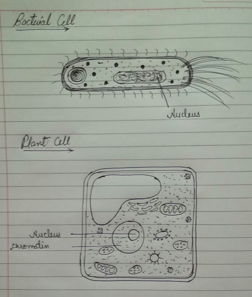Draw outline diagram of a bacteria cell and plant cell label only download jpg ccuart Image collections