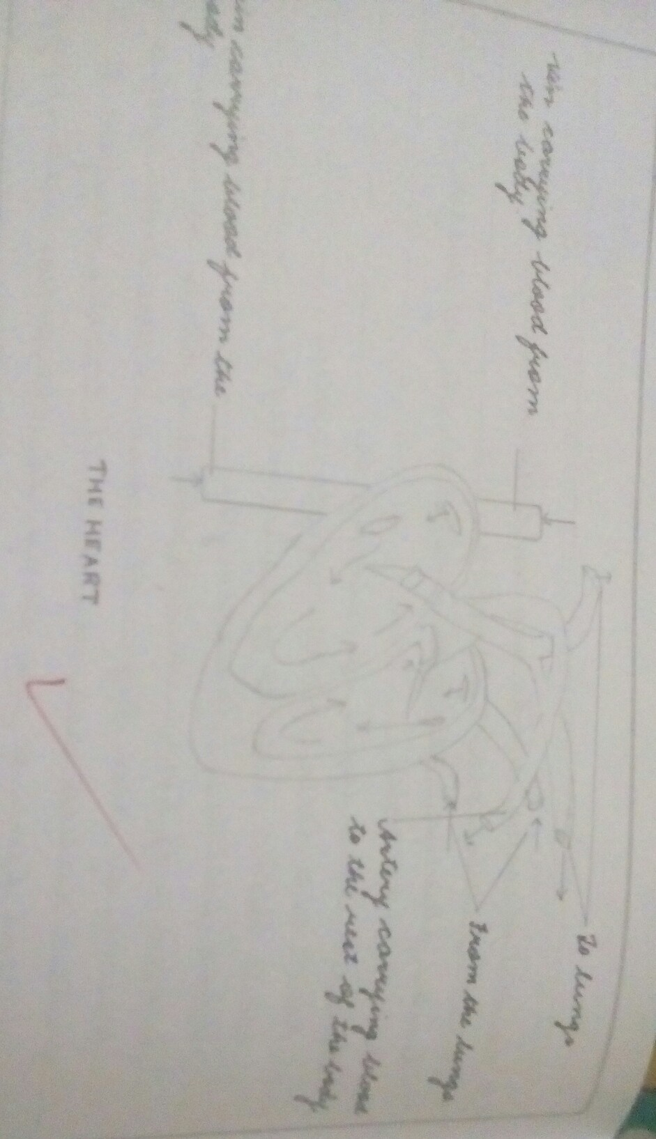 Draw A Well Labeled Diagram Of Heart Brainly In