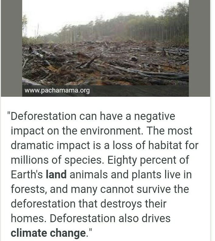 what are the effects of deforestation - Brainly in