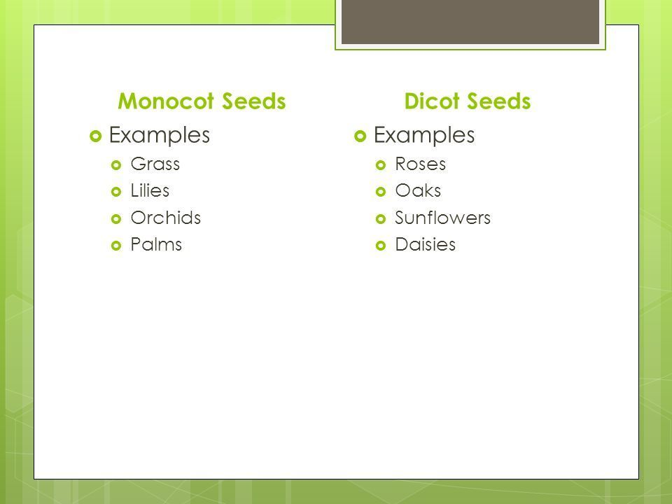 Prepare An Album Of Monocot And Dicot Seeds Brainly
