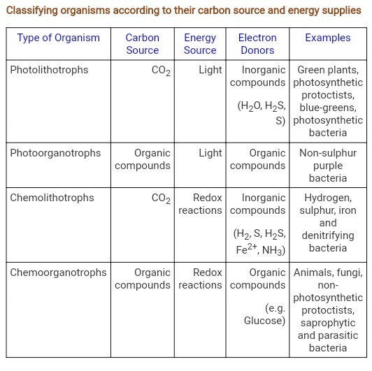 what is the basis for classification of organisms
