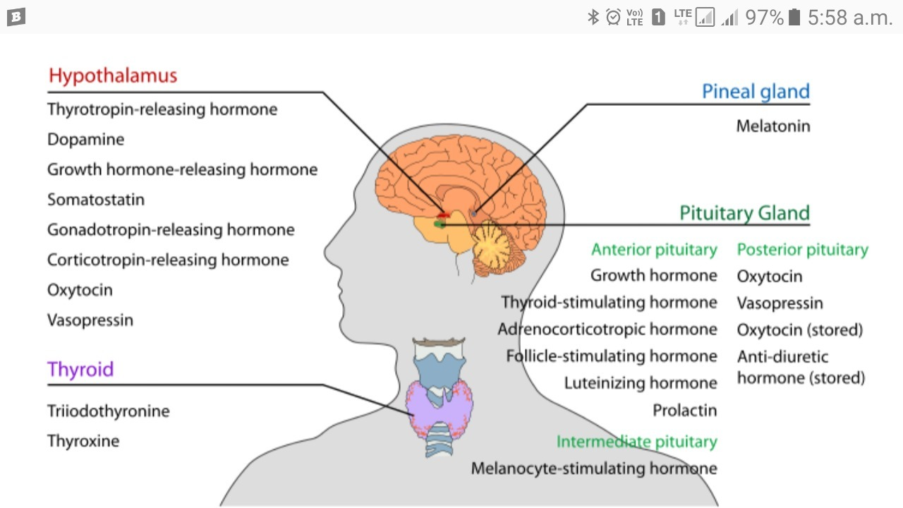 What Are Hormones Give The Name Of Associated Gland And Functions