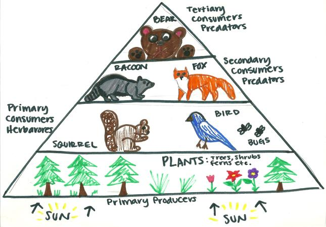 Draw A Diagram To Show Various Trophic Levels Upto Fourth Stage