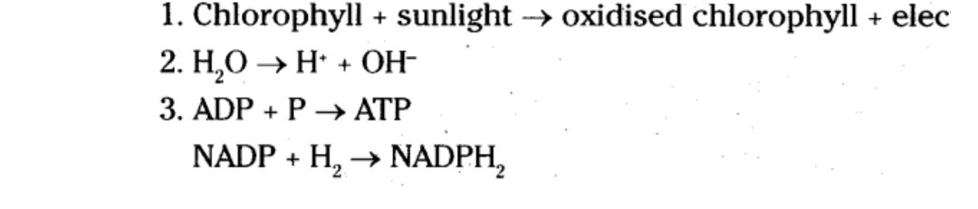 Define The Steps Of Light Reaction And Dark Reaction Brainly In