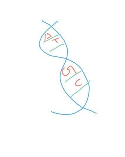 A Draw A Labelled Diagram Of Double Strand Helix Structure For Dna