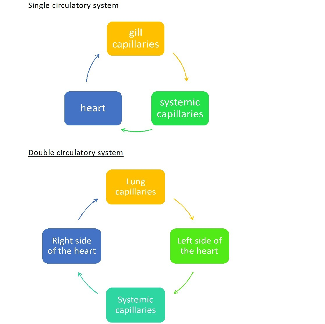 Draw a block diagram to explain single and double circulation download png pooptronica Images
