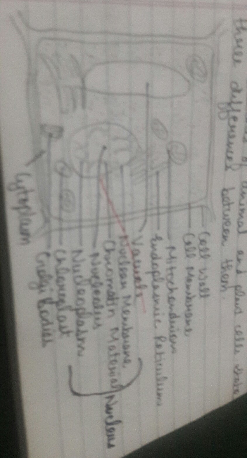 Draw A Neat Diagram Of Plant Cell And Label Any Three Parts Which