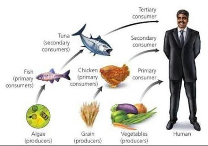 What Do You Understand By Food Webprepare A Food Web Of Your Own