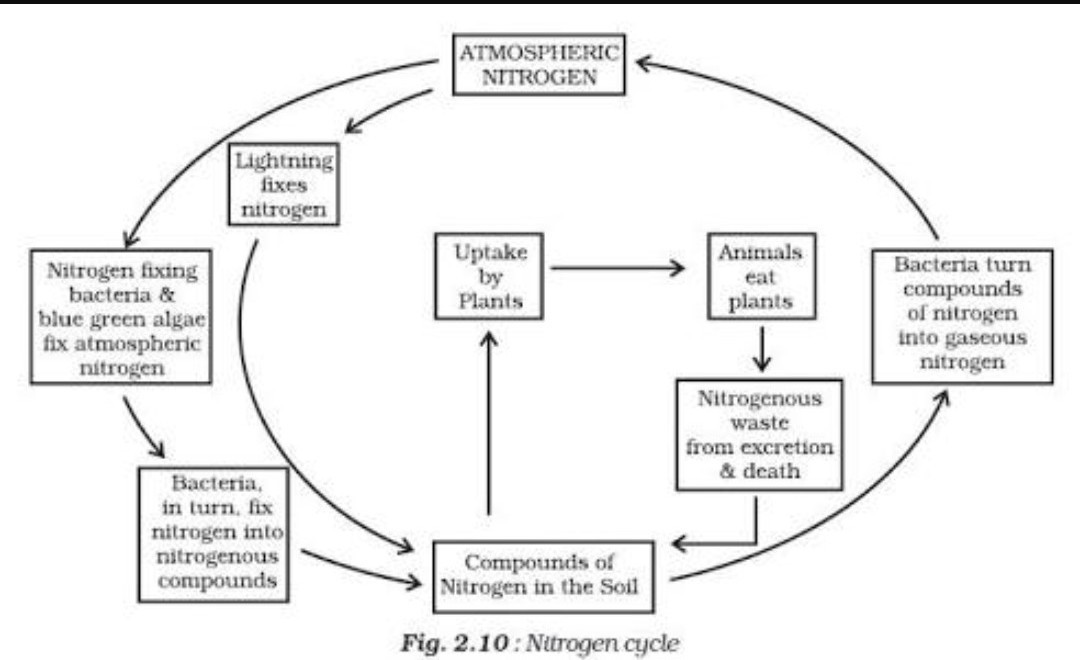 What Is Nitrogen Cycle Draw The Diagram Of Nitrogen Cycle Brainly