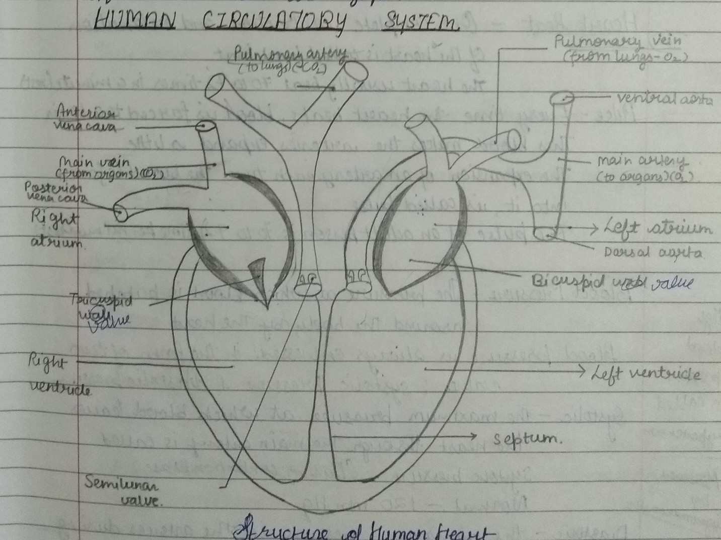 how do we learn heart and brain diagram for class 10th ...